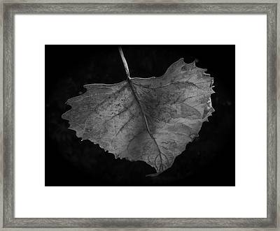 Solo Framed Print by Tim Good