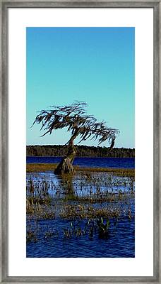 Solo Framed Print by Will Boutin Photos