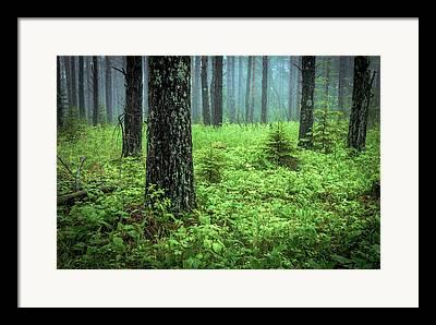 Solstice Glow Solstice Woods Green Trees Forest Fog Mist Hawk Ridge Duluth Framed Prints