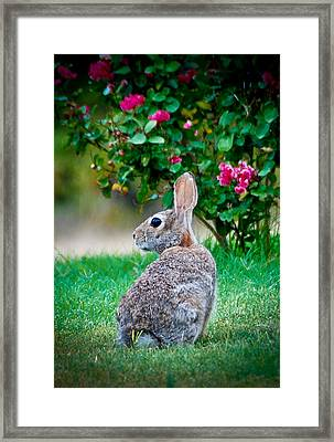 Some Bunny Loves You Framed Print by Dee Dee  Whittle
