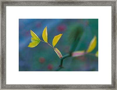 Some Color Framed Print by Andreas Levi