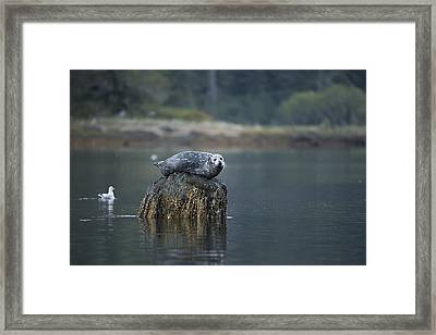 Some Days Are Like This Framed Print by Bill Cubitt