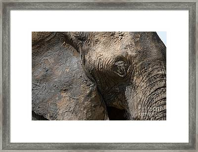 Framed Print featuring the photograph Some Elephants Prefer Mud by Chris Scroggins
