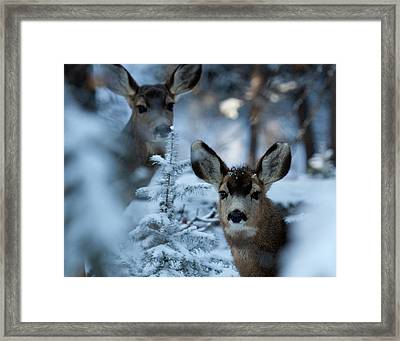 Framed Print featuring the photograph Somebody To Watch Over Me by Jim Garrison