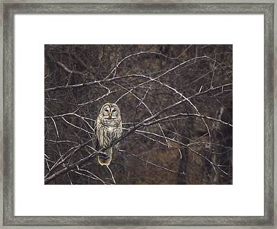 Somebody's Watching Me  Framed Print by Kimberly Danner