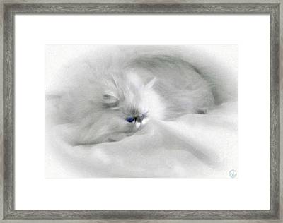 Somebodys White Darling Framed Print by Gun Legler