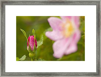 Someday I Want To Be Just Like You Framed Print by Nick  Boren