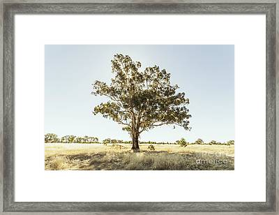 Someday I'll Be Tall Framed Print by Linda Lees