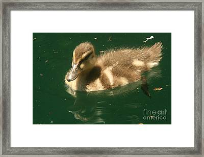 Someone Following Me  Framed Print by Linda Walker