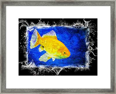Blue Framed Print featuring the photograph Something Fishy by Aaron Berg