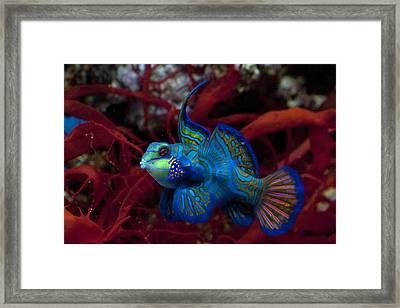 Something Fishy Framed Print by James Roemmling
