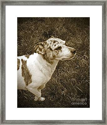 Something In The Air Framed Print by Adri Turner