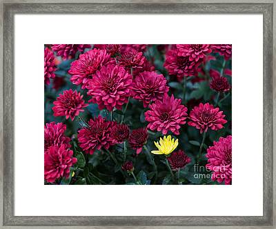 Something Is Not Like The Others Framed Print