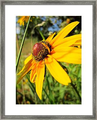 Something Out Of Place Framed Print