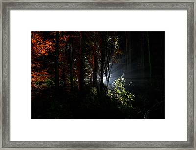 Something Out There Framed Print
