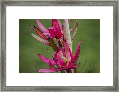 Framed Print featuring the photograph Something Stunning  by Naomi Burgess