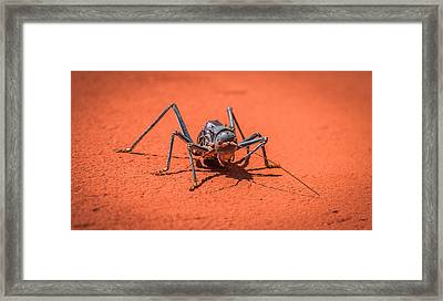 Something To Bug You - Armored Katydid Photograph Framed Print by Duane Miller