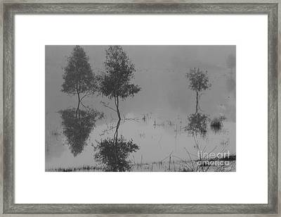 Something To Reflect On Framed Print by Linda Lees