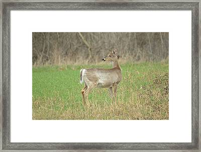 Somethings Caught His Attention Framed Print