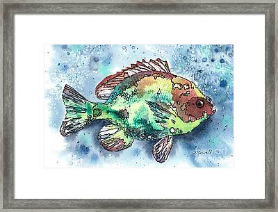 Something's Fishy Two Framed Print by Barbara Jewell