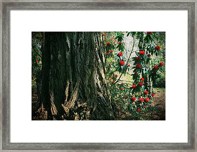 Sometimes Life Is Sweet Framed Print