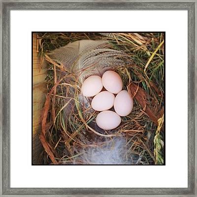 Tree Swallow Nest Framed Print