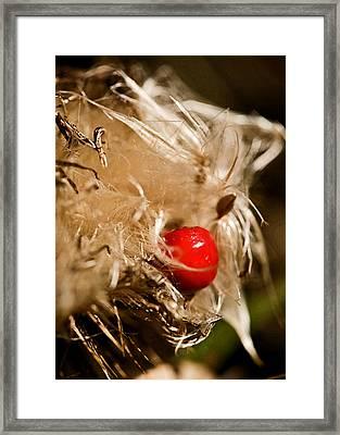 Sometimes Wrong Can Feel So Right Framed Print by Liz  Alderdice