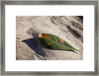 Somewhere Between Summer And Fall Framed Print by Georgia Mizuleva