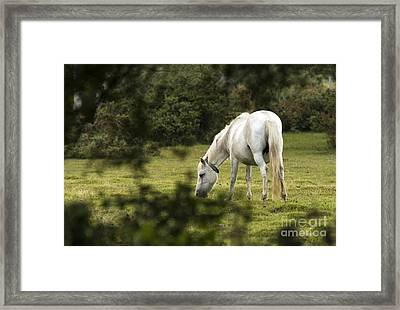 Somewhere In The Forest Framed Print by Angel  Tarantella