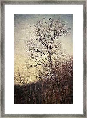 Somewhere In Time Framed Print by Taylan Apukovska