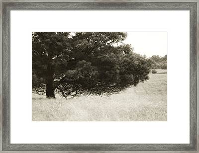 Somewhere To Dream Framed Print