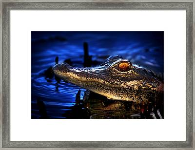 Son Of A Gator Framed Print by Mark Andrew Thomas