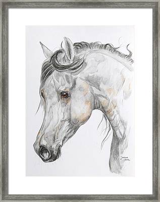 Son Of The Wind Framed Print by Janina  Suuronen