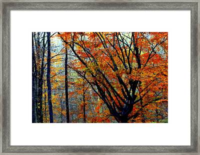Song Of Autumn Framed Print by Karen Wiles