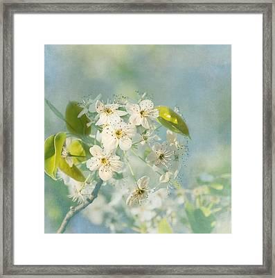 Song Of Spring Framed Print by Kim Hojnacki