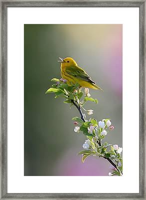 Song Of Spring Framed Print