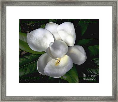 Song Of The Magnolia Framed Print