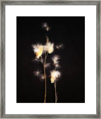 Song Of The Milkweed Framed Print by Gothicrow Images