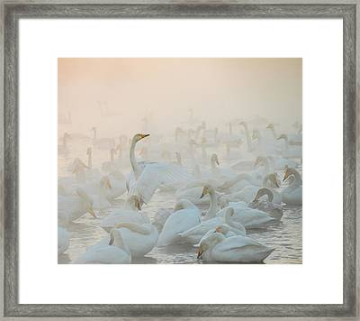 Song Of The Morning Light Framed Print