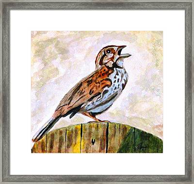 Song Sparrow Framed Print by Angela Davies