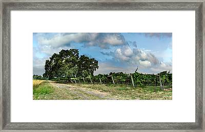 Sonoma County Life Framed Print by Stan Angel