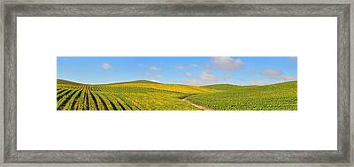 Sonoma County Vineyard Panorama Framed Print by Michael  Ayers