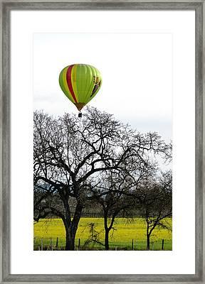 Sonoma Hot Air Balloon Over Mustard Field Framed Print by Sciandra
