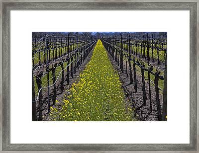 Sonoma Mustard Grass Framed Print by Garry Gay