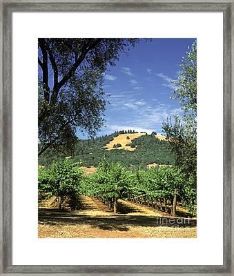 Sonoma Valley Vineyard Framed Print by Craig Lovell