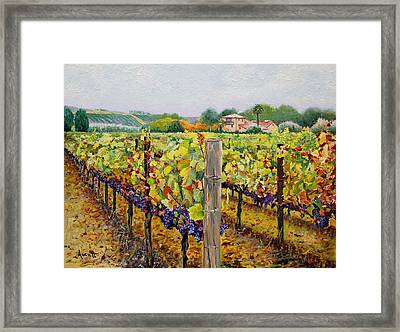Sonoma Vineyard Framed Print by Ron Aucutt
