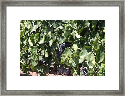 Sonoma Vineyards In The Sonoma California Wine Country 5d24489 Framed Print by Wingsdomain Art and Photography
