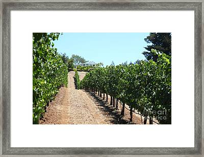 Sonoma Vineyards In The Sonoma California Wine Country 5d24507 Framed Print by Wingsdomain Art and Photography