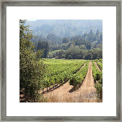 Sonoma Vineyards In The Sonoma California Wine Country 5d24515 Square Framed Print by Wingsdomain Art and Photography