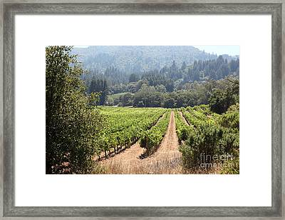 Sonoma Vineyards In The Sonoma California Wine Country 5d24515 Framed Print by Wingsdomain Art and Photography